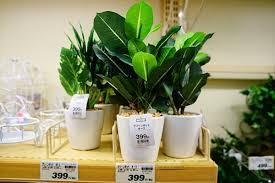 セリア 観葉植物、造花